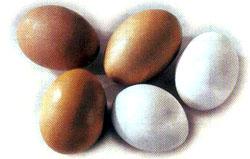 Slepačie vajcia a žĺtko ako zdroj lecitínu